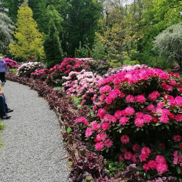 Arboretum w Wojsławicach 2021r. - zdjęcie