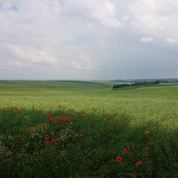 Brama Morawska - zdjęcie