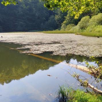 Pójdę w Połoniny... czyli na szlaku z bieszczadzkimi aniołami – Dzień VII (Jeziorka Duszatyńskie, Komańcza) - zdjęcie
