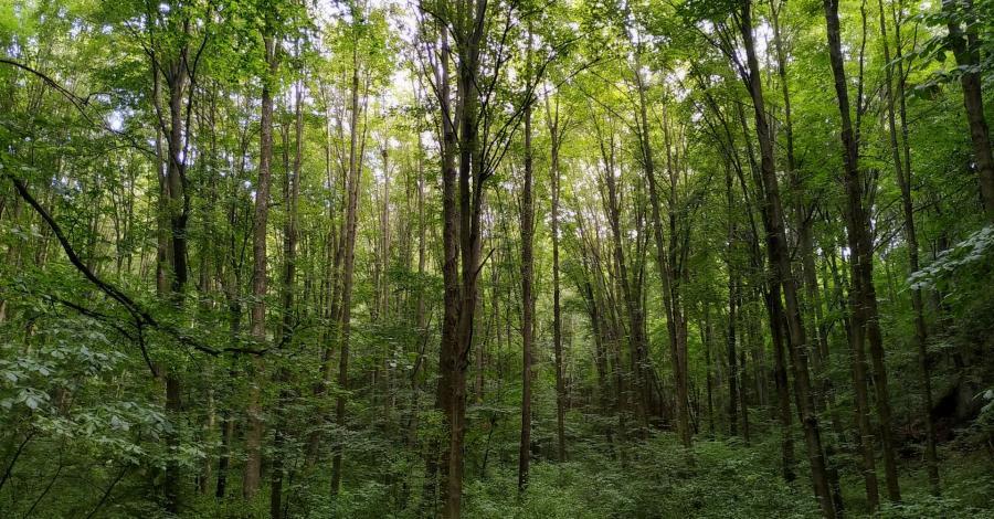 Dziki Wąwóz Ostryszni i piękna Dolina Dłubni - zdjęcie