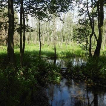 Puszcza Knyszyńska – lato i inne pory roku - zdjęcie